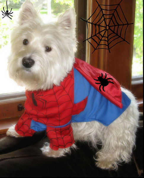 Riley spiderman